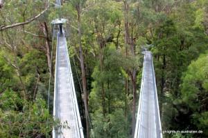 Otway Fly und den Treetop Adventures