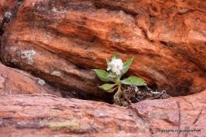Pflanzen wachsen in den kleinsten Spalten