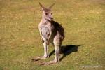 Tierwelt in Australien